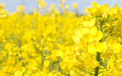Die Pollen-Pause richtig nutzen